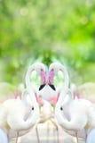 Flamant en forme de coeur, Photographie stock