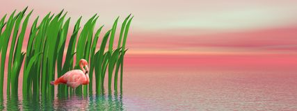 Flamant et waterplants par coucher du soleil Images stock