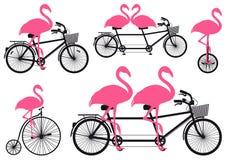 Flamant sur la bicyclette, ensemble de vecteur Photographie stock