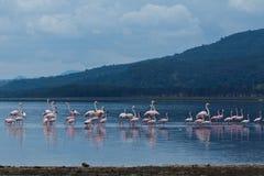 Flamant sur le lac Photos libres de droits