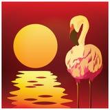 Flamants au coucher du soleil Photo libre de droits