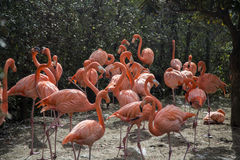 Flamants au zoo d'Ueno à Tokyo, Japon Image stock
