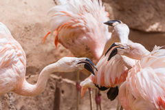Flamants dans le zoo image stock