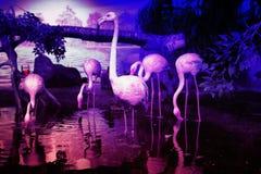 Flamants roses dans le plan rapproché d'aquarium Photographie stock