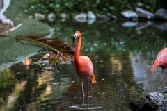 Flamants rouges et roses dans un étang Photo libre de droits