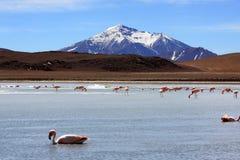 Flamants sur le lac en montagne des Andes, Bolivie photos stock