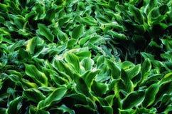 Flamas de cores verdes e amarelas Foto de Stock