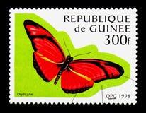 Flambeau (Dryas Julia), motyla seria około 1998, Fotografia Stock