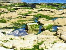 Flamborough Head East coast UK. Stock Images