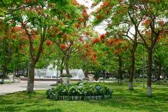 Flamboyant, c'est une manière mènent à la fontaine du pair de Hai Phong Photos stock