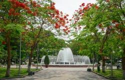 Flamboyant, c'est une manière mènent à la fontaine du pair de Hai Phong Image libre de droits