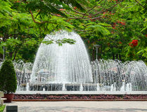 Flamboyant, c'est une manière mènent à la fontaine du pair de Hai Phong Photo stock