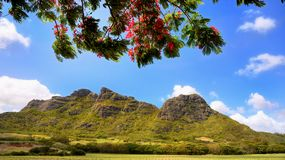 Mauritius Island, Mountains Landscape royalty free stock photo