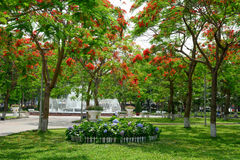 Flamboyant, this is a way lead to the fountain of Hai Phong  par Stock Photos
