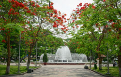 Flamboyant, this is a way lead to the fountain of Hai Phong  par Royalty Free Stock Image