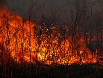 Flame. A brush fire. A close-up of the flame. Russian Far East. Primorsky Region Stock Images