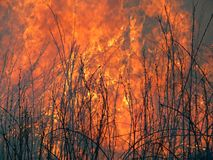 Flame. A brush fire. A close-up of the flame. Russian Far East. Primorsky Region Royalty Free Stock Photo