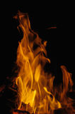Flame. A hot burning flame on black background Stock Photography