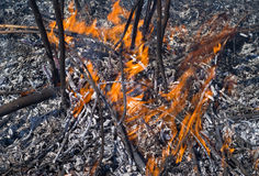 Flame and ash 1. A close up of the flame of brushfire stock photography