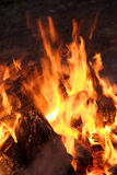 Flame of big bonfire. Close-up Royalty Free Stock Image