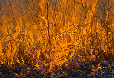 Flame of brushfire 23. A close up of the flame of brushfire. Spring stock photo