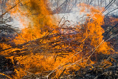 Flame of brushfire 29. A close up of the flame of brushfire. Early spring stock image