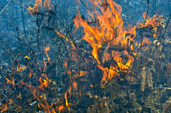 Flame of brushfire 12. A close up of the flame on brushfire royalty free stock photo