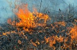 Flame of brushfire 14 Stock Image