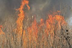 Flame of brushfire 29. A close up of the flame of brushfire in reed stock photo