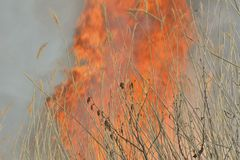Flame of brushfire 32. A close up of the flame of brushfire in reed stock photos