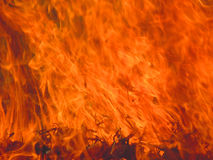 Flame burning grass Stock Image