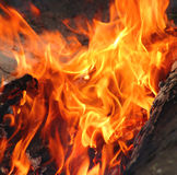 Flame of camp-fire royalty free stock photo
