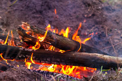 Flame of camp fire Royalty Free Stock Photo
