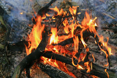 Flame of firewood in camp fire Stock Images