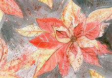 Flame Leaf. Hand painted flame-leaf flower Royalty Free Stock Image