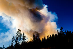 Wildfire Flames in Yellowstone Stock Images