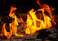 Flame tips on the firewood. Royalty Free Stock Image
