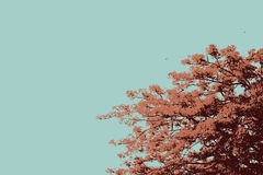 The Flame Trees vector Royalty Free Stock Photography