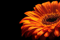 Flamed. Orange glowing flower on the black background Royalty Free Stock Photos