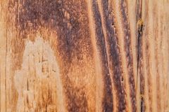 Flamed wood texture Stock Photography