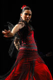 flamenco Stockbild