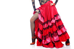 flamenco Obraz Stock