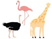 Flamenco, avestruz y jirafa Fotos de archivo