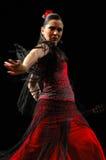 Flamenco Stock Image