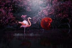 Flamenco contra danza roja de los pescados fotografía de archivo libre de regalías