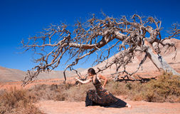 Flamenco and a dead tree Stock Photography