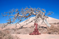 Flamenco and dead tree Stock Images