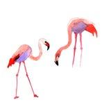 Flamenco del pájaro del cielo en una fauna por estilo de la acuarela aislada Imagen de archivo libre de regalías