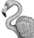Flamenco dibujado en la pluma trasera y blanca libre illustration