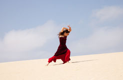 Flamenco in the dunes Stock Photography